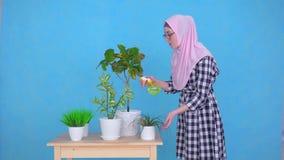 Una mujer musulmán joven en el hijab que rocía las plantas en la tabla de la casa almacen de metraje de vídeo