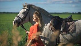 Una mujer rubia encantadora hermosa que camina con un caballo en un campo almacen de metraje de vídeo