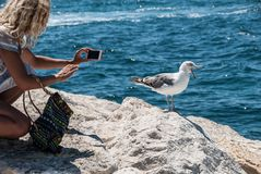 Una mujer rubia joven intenta hacer la foto de una gaviota de griterío que se coloca en un embarcadero de piedra cerca del mar Foto de archivo
