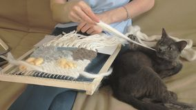 Una mujer teje en un telar un bordado hermoso hecho del hilado, en un estudio casero, el gato está cerca almacen de video