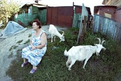 Una mujer y las cabras Fotografía de archivo libre de regalías