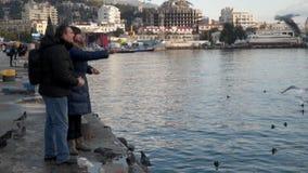 Una mujer y un hombre están alimentando gaviotas almacen de video