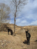 Una mula en el campo Imagen de archivo libre de regalías