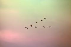 Una multitud de aves migratorias se alineó en una formación de V Imágenes de archivo libres de regalías