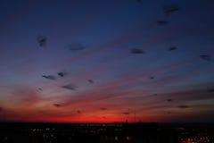 Una multitud de cuervos después de la puesta del sol Fotos de archivo libres de regalías