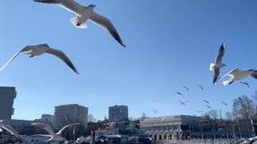 Una multitud de gaviotas en el cielo almacen de metraje de vídeo