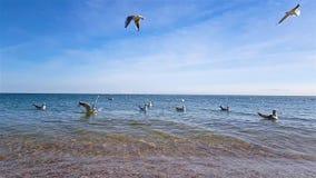 Una multitud de gaviotas en la playa Las gaviotas vuelan, nadan en el mar almacen de metraje de vídeo