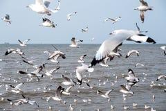 Una multitud de las gaviotas que vuelan sobre el mar con el fondo del cielo azul Imagen de archivo libre de regalías