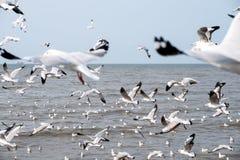 Una multitud de las gaviotas que vuelan sobre el mar con el fondo del cielo azul Foto de archivo
