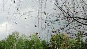 Una multitud de las palomas que vuelan en el cielo almacen de video