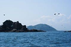 Una multitud de los cormoranes que sacan de una pequeña isla Phalacrocorax Japón del mar Imagen de archivo libre de regalías