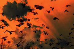 Una multitud de los pájaros negros que vuelan en el cielo Los pájaros vuelan en un cielo muy terrible Imagen de archivo