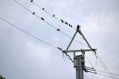 Una multitud de los pájaros que se sientan en una línea eléctrica Fotos de archivo libres de regalías