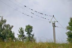 Una multitud de los pájaros que se sientan en una línea eléctrica Foto de archivo libre de regalías