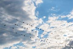 Una multitud de los pájaros que se sientan en los alambres contra el cielo hermoso Imagen de archivo libre de regalías