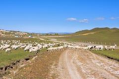 Una multitud de ovejas en el prado Fotografía de archivo libre de regalías