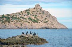Una multitud de pájaros en una piedra en el mar y el cabo Kapchyk, Crimea, Novy Svet Imágenes de archivo libres de regalías