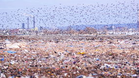 Una multitud de pájaros saca una descarga de la ciudad, landill Planta industrial en un fondo