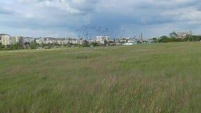 Una multitud de pájaros sube sobre el campo contra la perspectiva de la ciudad C?mara lenta almacen de video