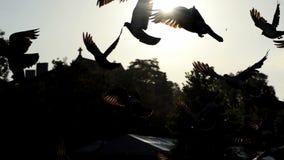 Una multitud de palomas saca y vuela sobre un cuadrado en un día soleado en el slo-MES metrajes
