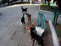 Una multitud de perros perdidos metrajes