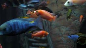 Una multitud de pescados coloridos en un acuario o una agua de mar almacen de metraje de vídeo
