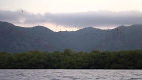 Una multitud del vuelo de los palos sobre el bosque almacen de video