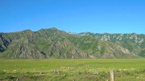 Una multitud grande de ovejas en el fondo de las montañas metrajes