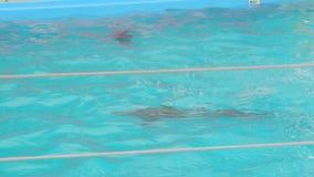 Una nadada del delfín en la piscina almacen de metraje de vídeo