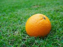 Una naranja en césped verde Fotografía de archivo libre de regalías