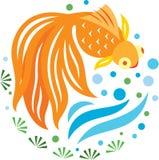 Una natación de oro de los pescados en la charca Imagen de archivo libre de regalías