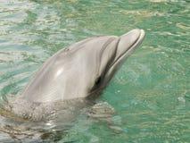 Una natación del delfín en el Mar Rojo, Eilat Israel a e fotos de archivo