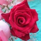 Una natura morta con la rosa rossa Immagine Stock Libera da Diritti