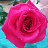 Una natura morta con Rosa rosa Fotografia Stock Libera da Diritti
