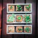 Una natura morta di tre piante del cactus su fondo di legno d'annata Tex immagine stock