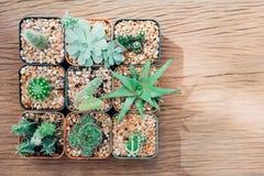 Una natura morta di tre piante del cactus su fondo di legno d'annata Tex fotografia stock