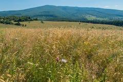 Una natura pittoresca con un grande prato con erba verde che allunga ai pendii delle montagne nella distanza Fotografia Stock