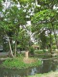 una naturaleza en Asia Imagen de archivo