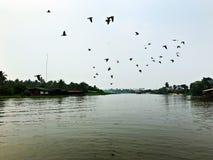 Una naturaleza hermosa de la paloma y del río Fotografía de archivo