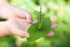 Una nave de hojas en las manos de un niño joven Día de verano asoleado imagenes de archivo