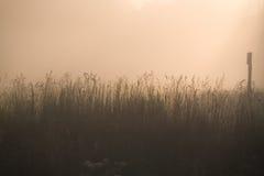 In una nebbia Immagini Stock