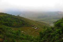 Una nebbia che copre le risaie in Sapa, Vietnam Fotografia Stock
