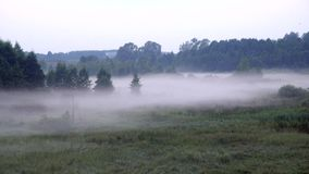 Una nebbia spessa si insinua la penombra in foresta stock footage