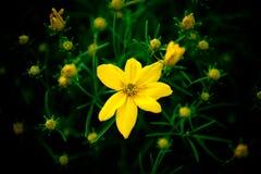 Una nebulosa dei fiori Fotografie Stock Libere da Diritti