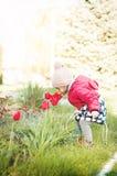 Una niña huele los tulipanes rojos florecientes Fotos de archivo libres de regalías
