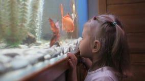 Una niña mira los pescados que nadan en el acuario con curiosidad metrajes