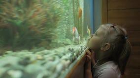 Una niña mira los pescados que nadan en el acuario con curiosidad almacen de video