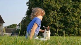 Una niña rizada frota ligeramente un gato tres-coloreado Día de la familia pets metrajes