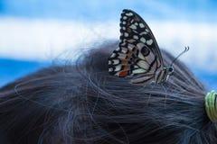 Una niña y una mariposa en su cabeza fotos de archivo libres de regalías