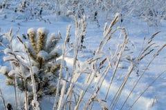 Una nieve sola del priporozhennaya del árbol de navidad en el bosque Imagen de archivo libre de regalías